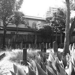 Cemetery of Confucian scholar family of 17th century. #tokyo #cemetery #grave #graveyard #tomb #historicmonument