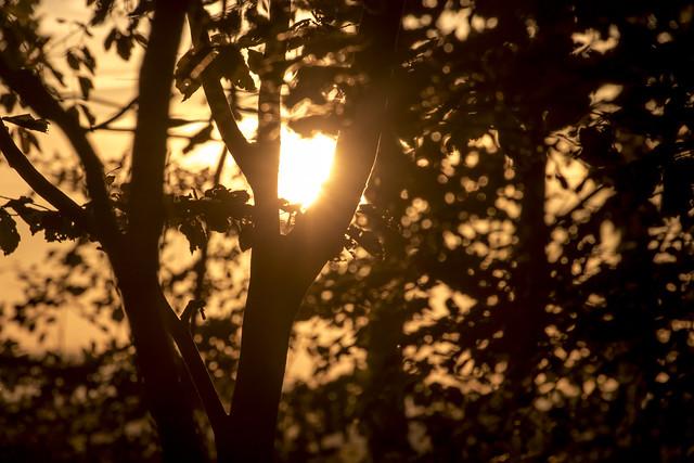 Sonne im Zweig