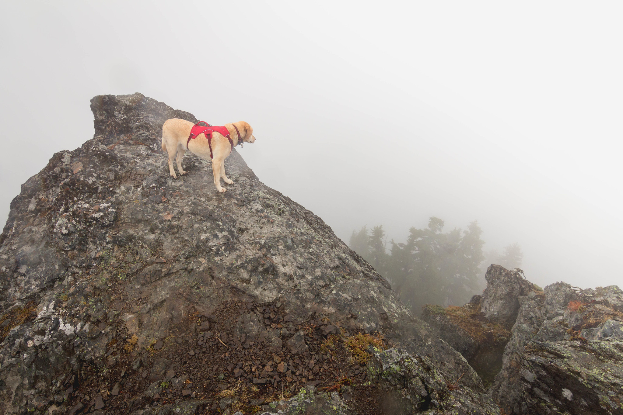 Summit dogs on French Cabin Mountain
