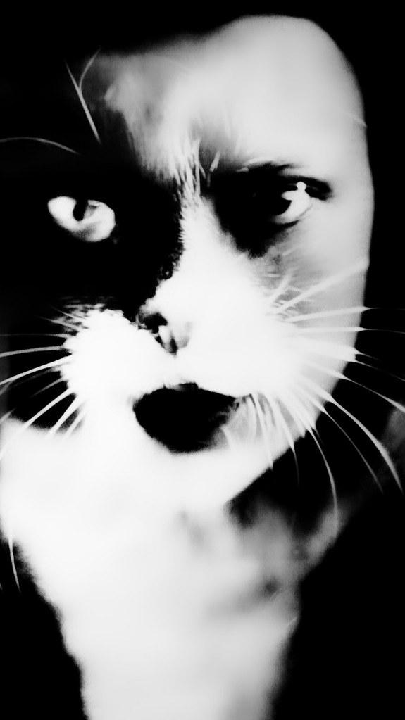 Kattenkabinet_10_2017-12
