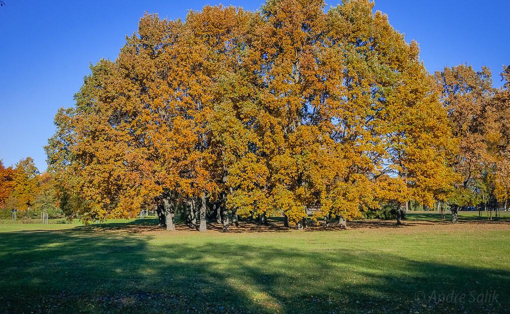 Fine Autumn colors! 11:24:16 DSC_3230