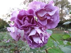 Valley Gardens Pontefract