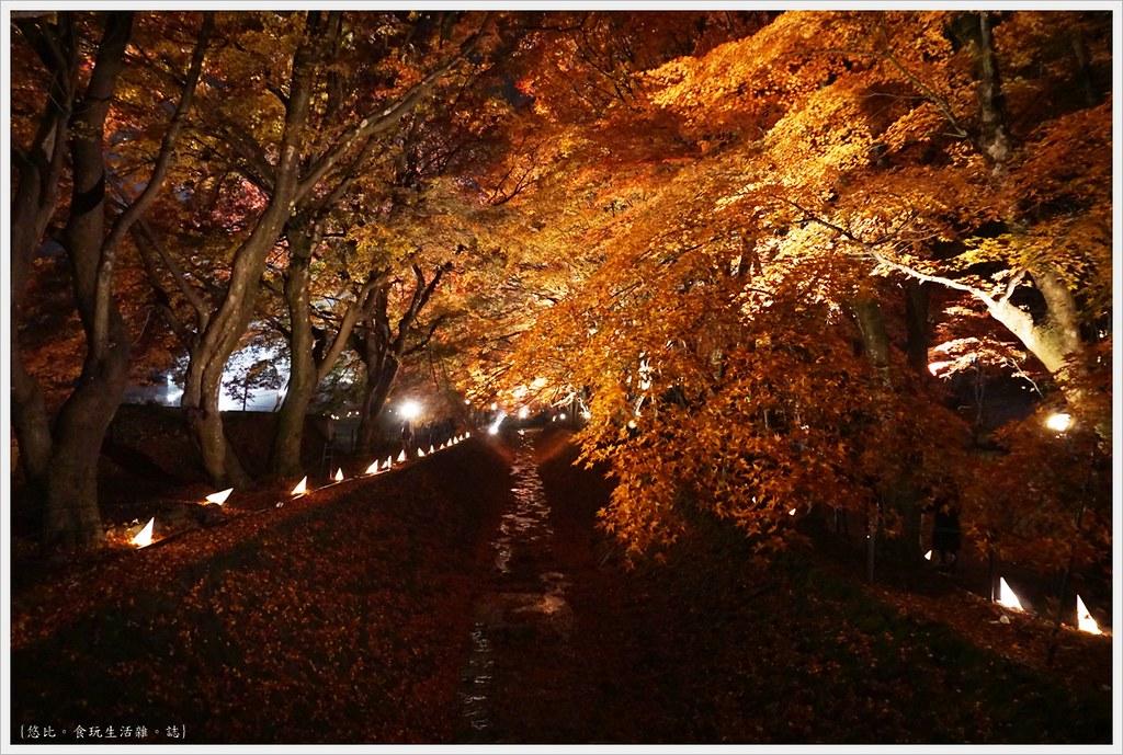 紅葉迴廊-紅葉祭-夜楓-36