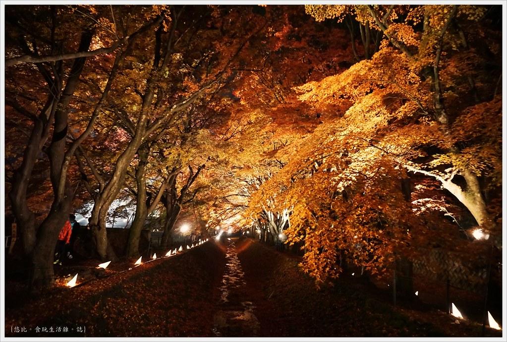 紅葉迴廊-紅葉祭-夜楓-32