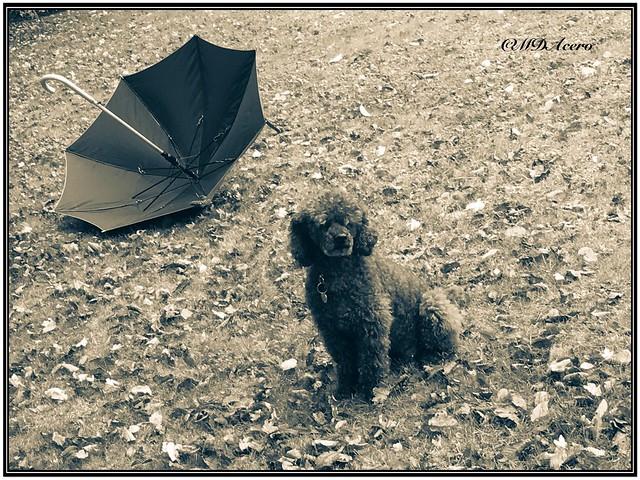 Un día ventoso