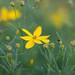Flying flower by BerniVienna