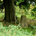 Trig point hidden under a tree atop a hill