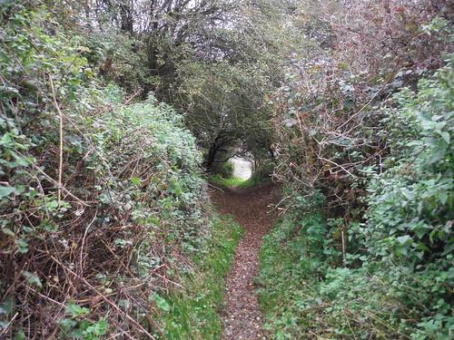 Path through Folkestone Warren