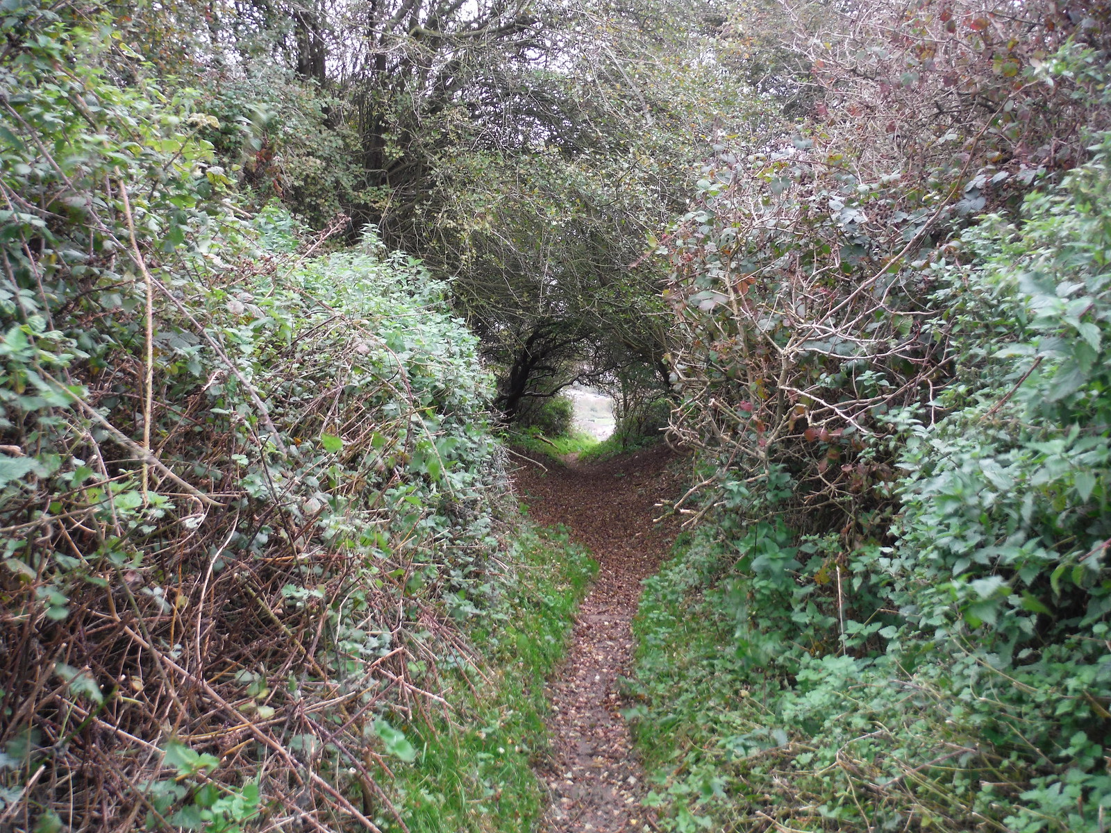 Path through Folkestone Warren SWC Walk 93 - North Downs Way: Sandling to Folkestone or Dover