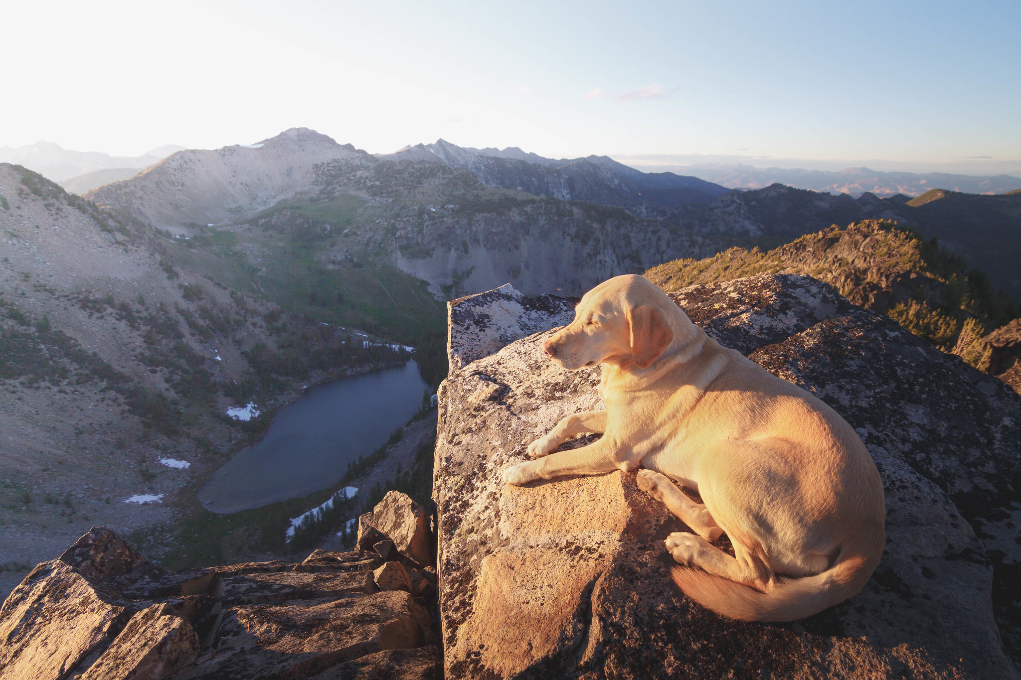 Summit dogs on Sunrise Peak