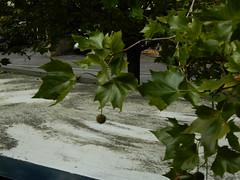 bus top roof gardens