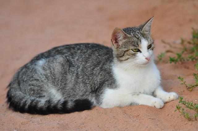 Farm Cat 2