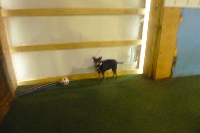10/08/17 Soccer Ball Play! :)