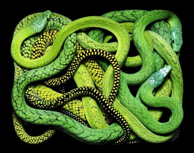 snake_art_24