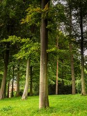 Trees Stowe Gardens