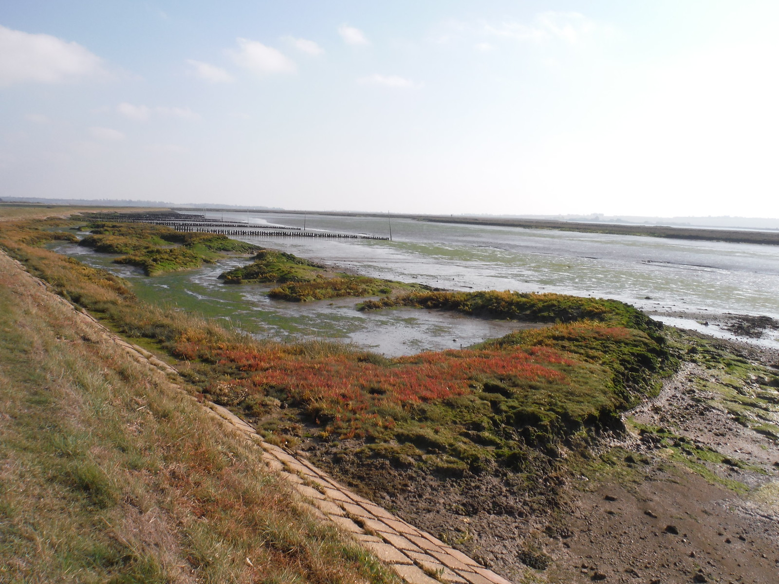 Tidal Marshland SWC Walk 162 North Fambridge to Burnham-on-Crouch