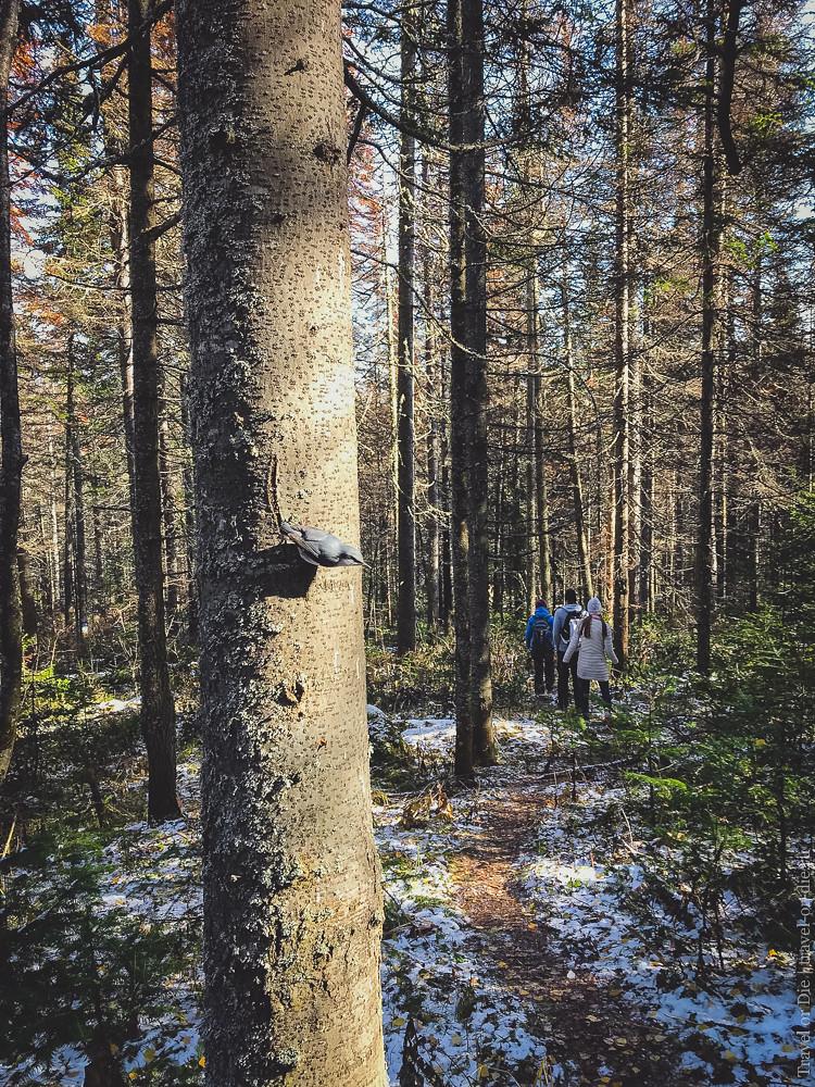 10.09-Stolby-Reserve-Krasnoyarsk-iphone-1500px-030