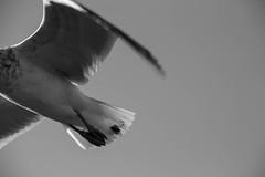 I saw a headless seagull...
