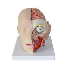 Human Anatomical Anatomy Head Skull Brain Medical Comprehensive teaching Model (1199393) #Banggood