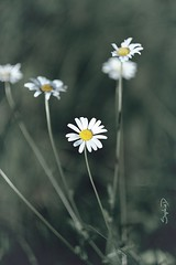 Fleurs - Photo of Minzac