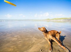Friday fun wouldn't be complete without compulsory Frisbee time! Happy weekend everyone! • • • • • #dogoftheday #ilovemydog #doglover #puppylove #puppiesofinstagram #instapuppy #wildatlanticway #campingwithdogs #loves_ireland #hikingwithdogs #puppies #wan