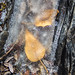 Leaves in Ice by djking