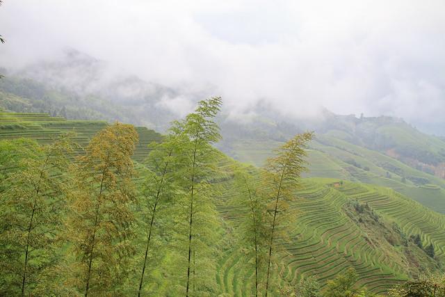 rice terrace - 6