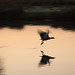 Dawn Flight - Bushy Park (021)