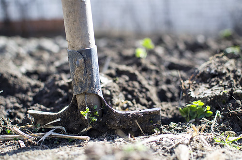 Picture about gardening