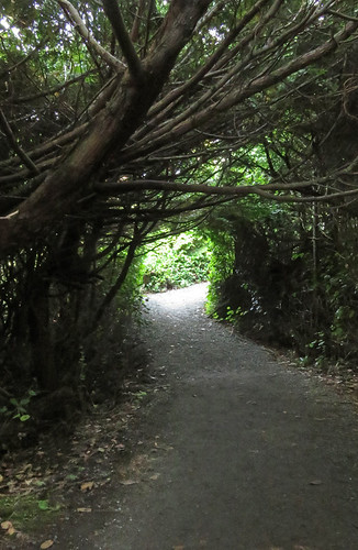 Tree tunnel on Ucluelet's Wild Pacific Trail