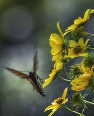 MonarchButterfly_SAF2298-2