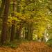 Autumn Colour At Kinver Edge