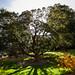 Botanic Gardens Edinburgh Oct 2017 -61