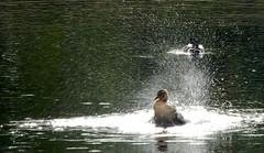 HolderSplish Splash