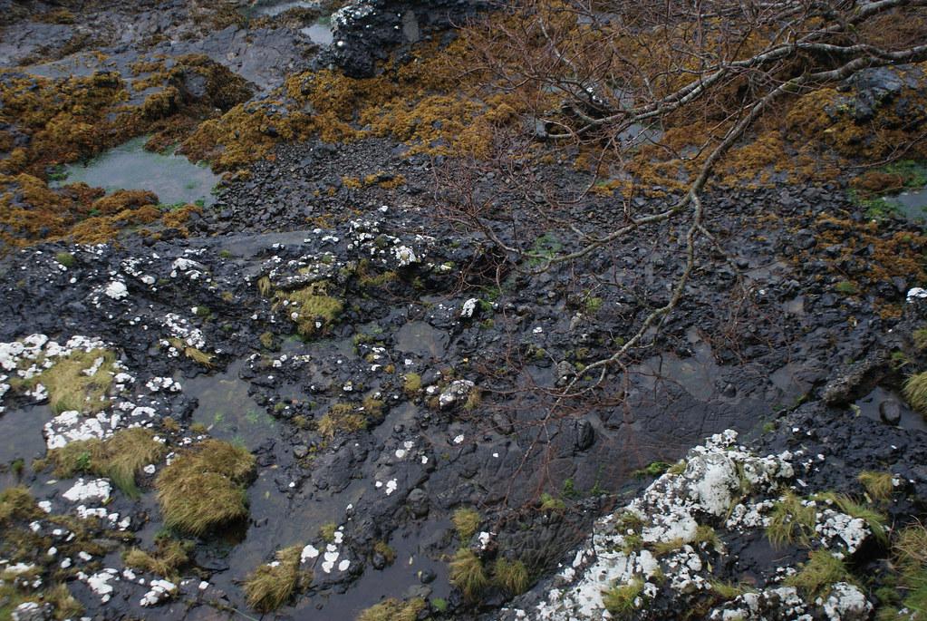 Paysage de bord de mer près d'Oban.