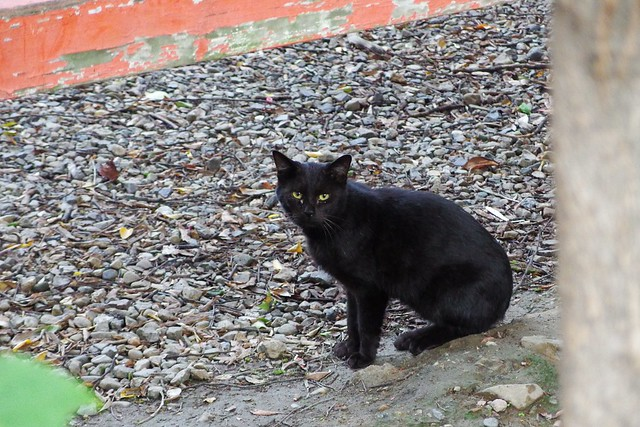 Today's Cat@2017-10-25