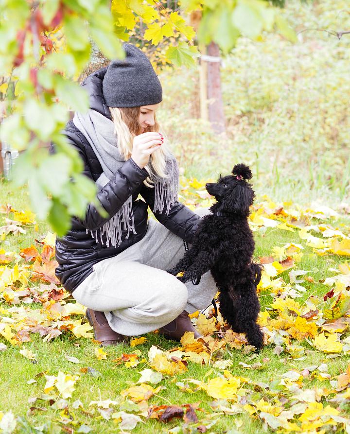 autumn_poodle6