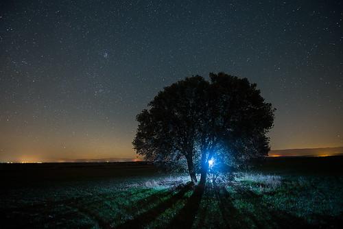 arboles nocturnos 37459332730_04649a5eef