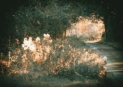 Special light 4