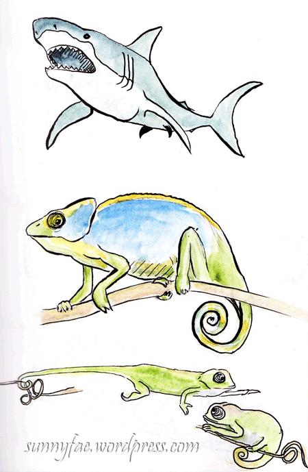 chamelion & shark sketch