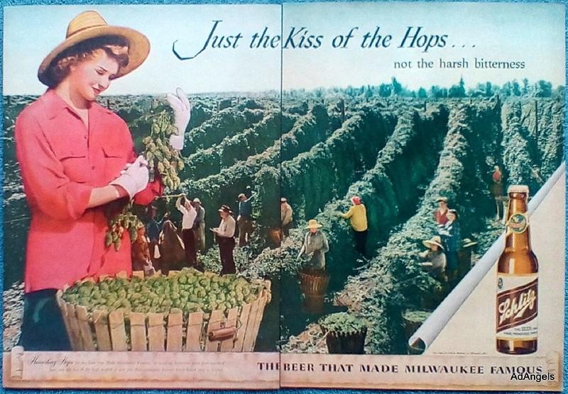 Schlitz-1946-Beer-Harvesting-Hops-People-Picking-Kiss