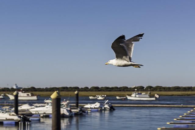 Sobrevolando el puerto