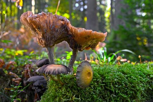 Mushroom on tree stalk