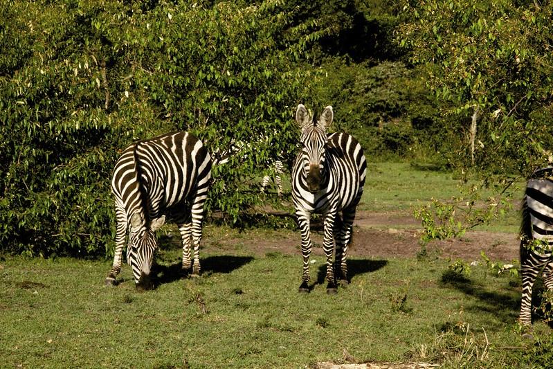 Maasai Mara 2 58