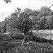 Roslin Glen Tree