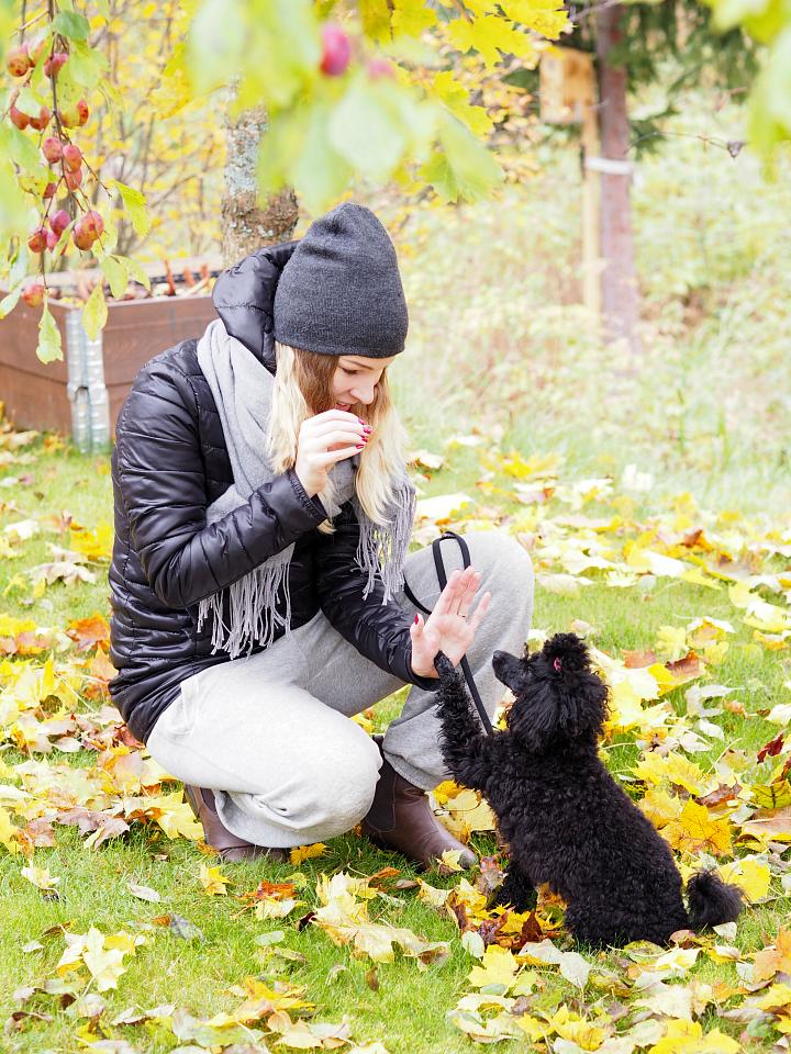 autumn_poodle