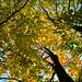 Autumn trees.  Witney Oxfordshire UK.