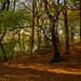 Autumn walk Prestwich Clough
