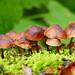 Colurful Fungi