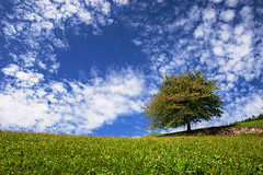 L'albero della vita